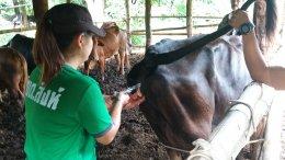 โครงการส่งเสริมและป้องกันโรคระบาดในสัตว์เลี้ยง ประจำปี ๒๕๖๒