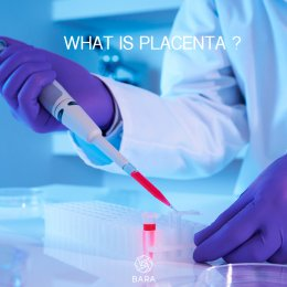What is Placenta?