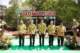 ดาว ประเทศไทย