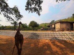 อีกหนึ่งผลงานการติดตั้ง หินเรียงสำเร็จรูป Slope Protection Block สวนสัตว์ เปิดเขาเขียว (โซนแอฟริกา) ติดตั้งรวดเร็ว สวยงาม แข็งแรง
