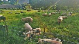 ภาพบรรยกาศการเข้าเยี่ยมชมฟาร์มและโรงงานชำแหละและตัดแต่งของกรรมการตลาดสุขใจ