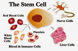 What is stem cell therapy???