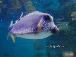 พาเที่ยวญี่ปุ่น พิพิธพันธ์สัตว์ที่สูงที่สุดในญี่ปุ่น Sunshine International Aquarium