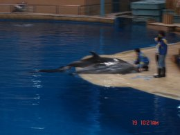 พาเที่ยว พิพิธพันธ์สัตว์น้ำ ปักกิ่ง Beijing Haiyangguan (Beijing Aquarium)