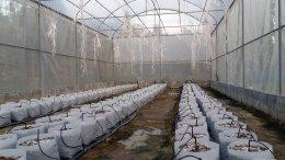 ฟาร์มเมล่อนสวนมะนาวแป้นรำไพพันธุ์ทวาย ต.มาบแค จ.นครปฐม