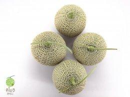 เมล็ดพันธุ์เมล่อนญี่ปุ่นคิโมจิ