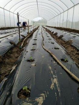 JNT Farm