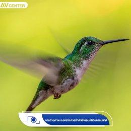 เทคนิคการถ่ายภาพ Bird Photography ให้องค์ประกอบสวยจนละสายตาไม่ได้