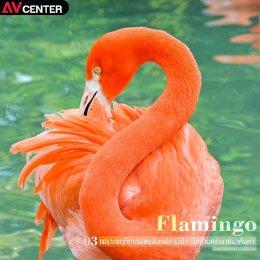 5 เหตุผลที่ช่างภาพต่างก็ชอบ นก Flamingo