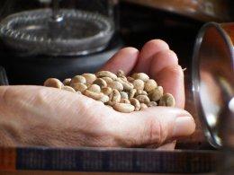 ก้องวัลเล่ย์ Robusta Coffee Ranong
