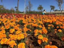 ทัวร์ลาวใต้ เมืองปากซอง จำปาสัก ชมสวนดอกไม้มนตรา