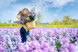 มหัศจรรย์ เชียงใหม่ สัมผัสไอหนาว เคล้าทุ่งดอกไม้ 3 วัน 2 คืน