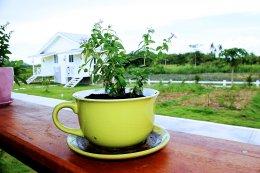 Coffee&Resort
