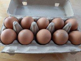 ฟาร์มผักสลัดและแม่ไก่ไข่