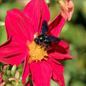 Black BeeOme ™  น้ำผึ้งหมักจากผึ้งดำ
