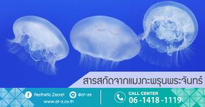 Moon Jelly Fish Extract