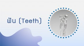 Structure & Function of Teeth