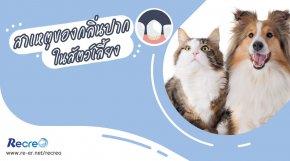 สาเหตุของกลิ่นปากในสุนัขและแมว สาเหตุที่ซ่อนอยู่เบื้องหลังและผลกระทบที่รอวันประทุ