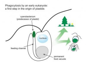 Hungry algae may explain how plants became green