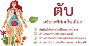 ตับ (肝 กาน) ทะเลของเลือดในร่างกายมนุษย์