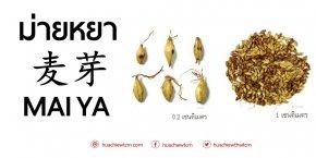 ม่ายหยา 麦芽 - ข้อมูลสมุนไพรจีน