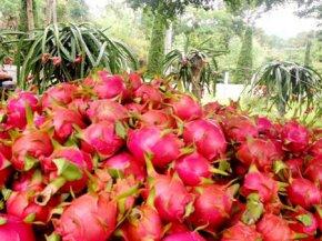 รีสอร์ทเราปลูกผลไม้ไร้สารพิษ