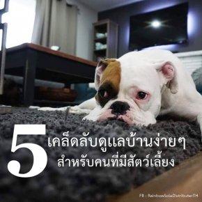 5 เคล็ดลับดูเเลบ้านง่ายๆ สำหรับคนที่มีสัตว์เลี้ยง
