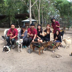 Petaneer donate FlexzWheels and PetWellSuit to Dog Shelter in Suphanburi, Thailand.