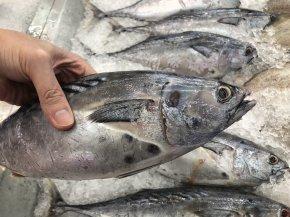 แมวกินแต่ปลา พอแล้วหรือ?