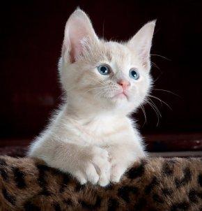รู้มั้ย แมวไม่สามารถขับเหงื่อเหมือนมนุษย์