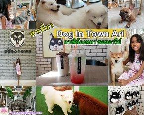 Dog In Town Ari