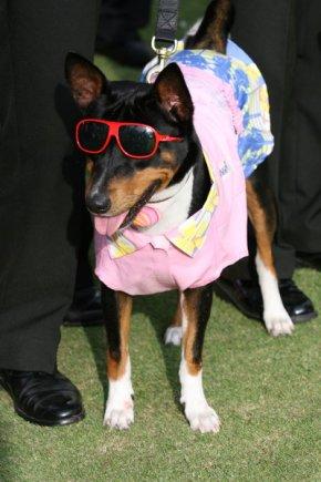 การแสดงสุนัขทรงเลี้ยง คุณนิลนนท์