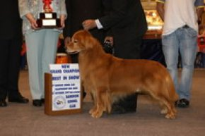 Results Best In Show 2007