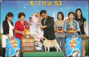 The Mall Toy Dog Championship Show 2010