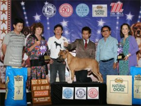 CHAMPION OF CHAMPIONS DOG SHOW 2011