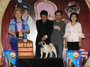 THE MALL TOY DOG CHAMPIONSHIPSHOW 2/2011