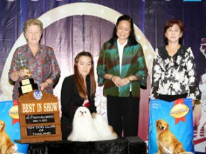 The Mall Toy Dog Championship Show 2/2011