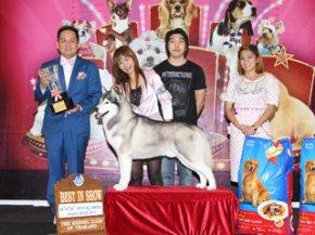 Champion Of Champions Dog Show 2012(AB3)