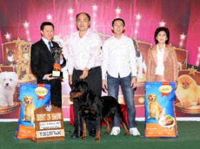 THE MALL TOY DOG CHAMPIONSHIP SHOW 1/2012(AB3)
