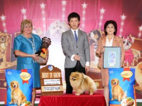 THE MALL TOY DOG CHAMPIONSHIP SHOW 1/2012(AB4)