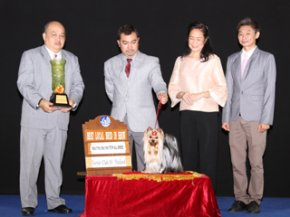Terrier Club Of Thailand Championship Dog Show(AB1)