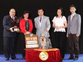 Terrier Club Of Thailand Championship Dog Show(AB3)