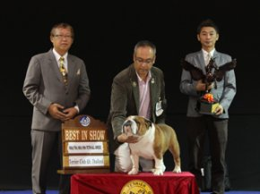 Terrier Club Of Thailand Championship Dog Show(AB4)