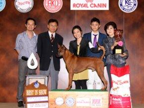 The Mall Toy Dog Championship Show 2/2012(AB2)