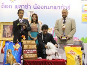 Thailand International Dog Show 2012(AB1)