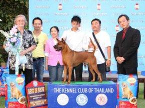 Thai Ridgeback Dog Specialty Championship Dog Show