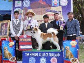 The Little Cowboy Grand Dog Show 2012 (TBK)
