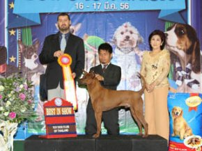 The Mall Toy Dog Championship Dog Show 2/2013(TRD)