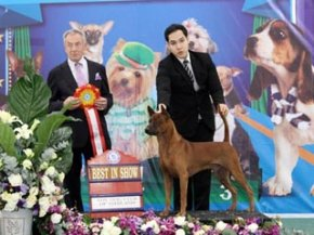 The Mall Toy Dog Championship Dog Show 1/2013(TRD)