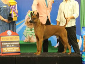 Bangkok FCI International Championship Dog Show 2013